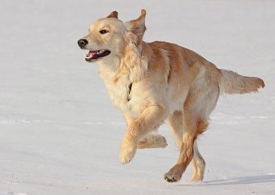 Hunde_745b
