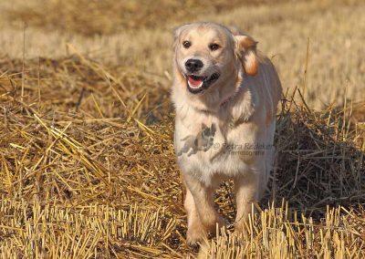Hunde_1207b