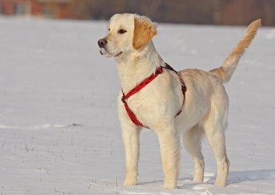 Hunde_738b